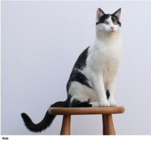 Cat Rob